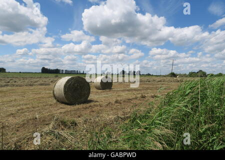 Cambridgeshire hay bales - Stock Photo