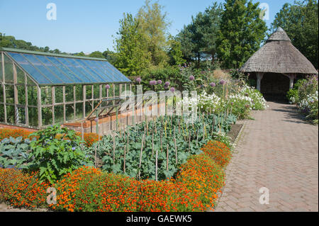 Elephant Garlic and Marigoldsin front of a Thatched Roof Summer House in the Fruit and Vegetable Garden at RHS Rosemoor - Stock Photo