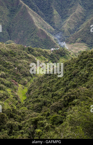 Batad rice terraces have an amphitheatre semi-circular quality with a village at its base. The rice terraces of - Stock Photo