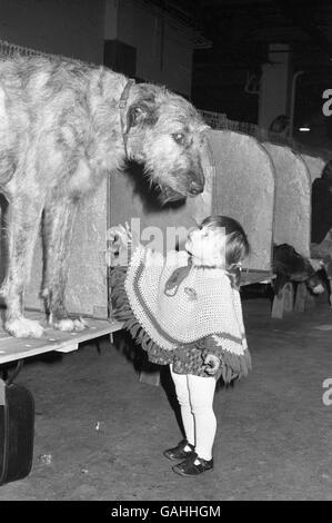 Animals - Cruft's Dog Show - Olympia - Stock Photo