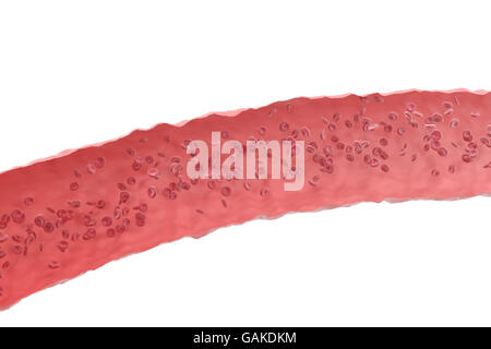 Red blood cells in cut flowing through veins from the human circulatory system. 3d illustration - Stock Photo