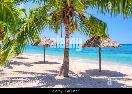 Straw umbrellas and palm trees on a beautiful tropical beach - Stock Photo