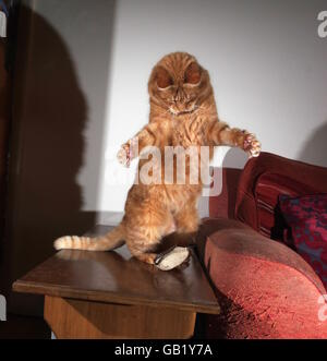 Ginger cat playing with toy mouse