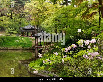 Near Jondeokjeong pavilion  in the secret garden of  palace Changdeokgung,  Seoul, South Korea, Asia UNESCO world - Stock Photo