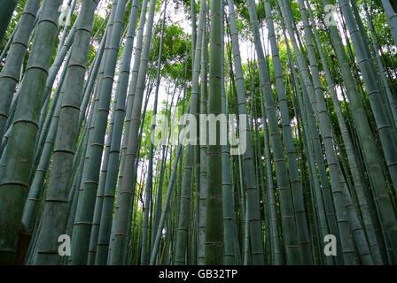 Bamboo forest in Arashiyama Kyoto Japan - Stock Photo