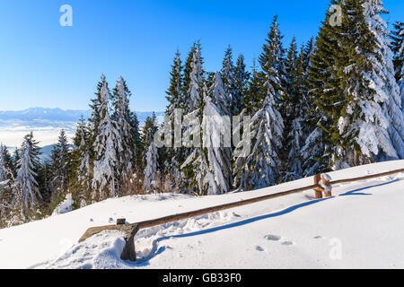 Winter trees and wooden fence in snow near Turbacz shelter in Gorce Mountains, Poland - Stock Photo