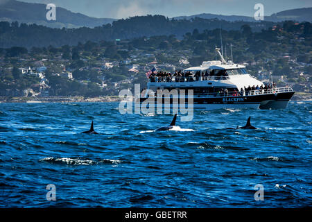 Tourists watch Orca whales in Monterey Bay, CA, USA - Stock Photo