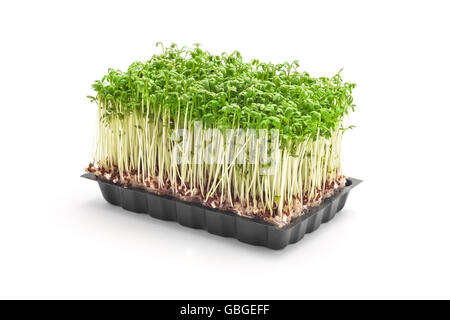 cress sprouts isolated on white - Stock Photo