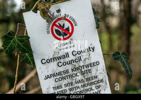 Invasive species concept. Warning sign for Japanese Knotweed [Fallopia japonica] control site in Cornwall. - Stock Photo