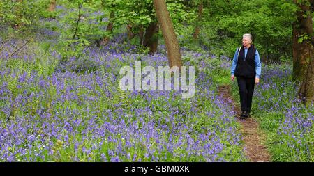 Spring weather Bluebells - Stock Photo