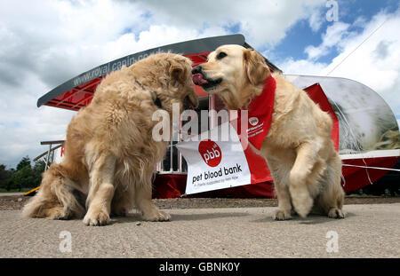 Pet Blood Bank UK - Stock Photo