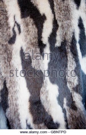 White tiger fur texture, artificial Stock Photo, Royalty ...
