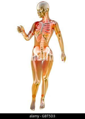 Human Female Skeleton standing pose on white. 3D illustration Stock ...