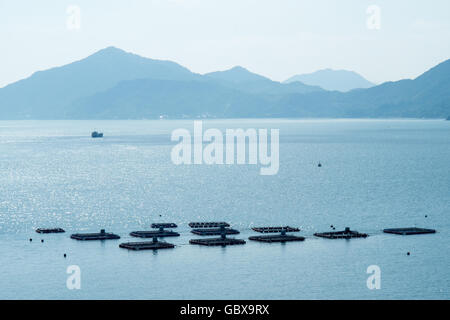 Oyster farming in the Seto Inland Sea, Japan. - Stock Photo