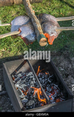 Ponassing a fish (Salmon) as a visual metaphor for survival food and outdoor cooking. - Stock Photo