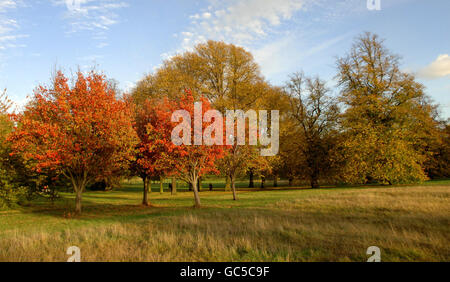 Parks and Open Spaces - Hyde Park - London - Stock Photo