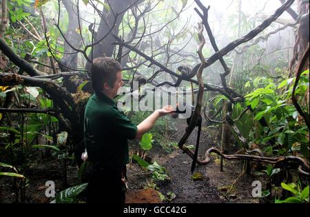 London Zoo Rainforest Life - Stock Photo