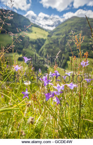 Flower meadow in Campo Tures, South Tyrol, Italy - Stock Photo