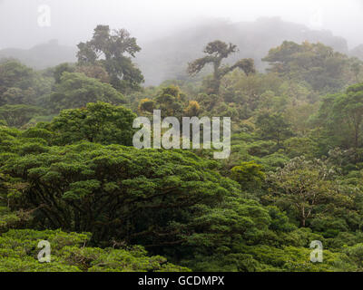 Monteverde Cloud Forest Reserve in Costa Rica - Stock Photo