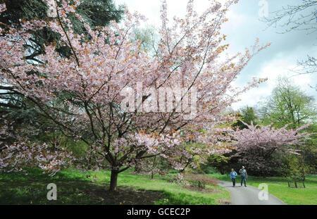 Batsford Arboretum expanison and development - Stock Photo