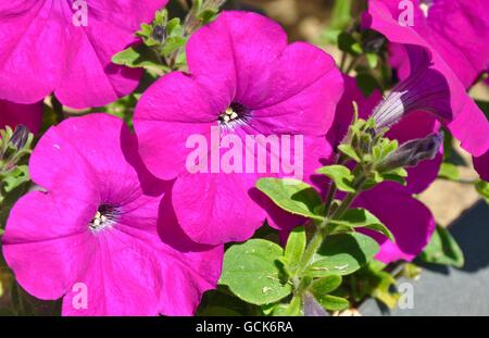 close up of some pinkish purple flowers stock photo, royalty free, Beautiful flower