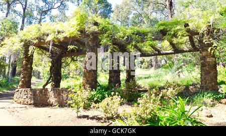 Pergola structure with rock pillars and lush green foliage with purple and white hanging wisteria on outdoor garden - Stock Photo