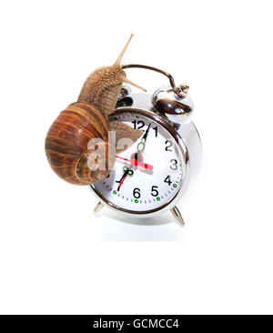 Time concept. Ordinary snail on alarm clock against white background - Stock Photo