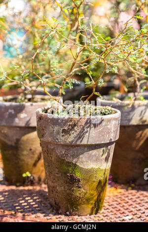 Image of old rustic plant pots. - Stock Photo