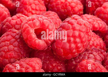 raspberry macro closeup - Stock Photo