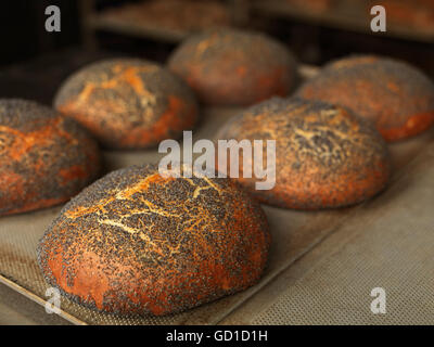 Several freshly baked round bread loaves on a baking tray - Stock Photo