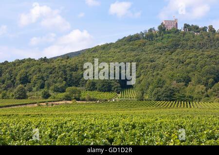 Hambach Castle, vineyards near Neustadt an der Weinstrasse, German Wine Route, Palatinate wine region, Rhineland - Stock Photo