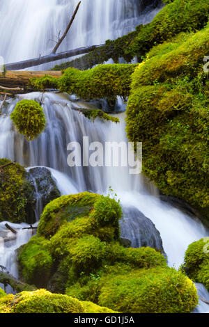 Natural, fallen log across the silky waterfall and mossy rocks of Clearwater Falls in Oregon on Umpqua Scenic Byway. - Stock Photo