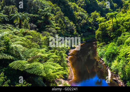Tropical rainforest scenery on State Highway 43 (Forgotten World Highway), Taranaki Region, North Island, New Zealand, - Stock Photo