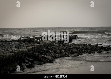 Seagulls sitting on rocks at the beach of Norderney in Germany - Stock Photo