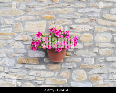 Bowl of purple (petunia) hanging from a rough stone wall of a country house made with uncut sandstones rocks and - Stock Photo