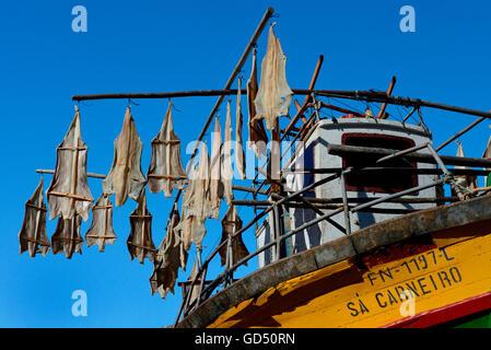 Fischerboot, Trocknen aufgehaengter Stockfisch, Madeira, Portugal, Europa - Stock Photo