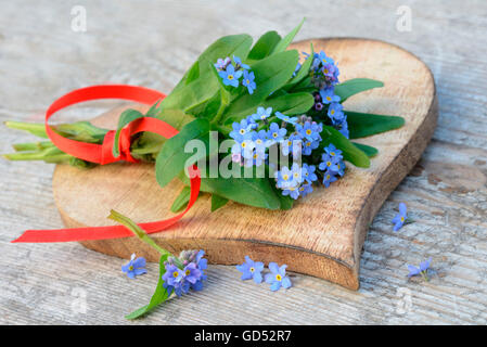 Forgetmenot / (Myosotis spec.) - Stock Photo