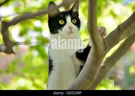 Domestic Cat, kitten climbing in tree - Stock Photo