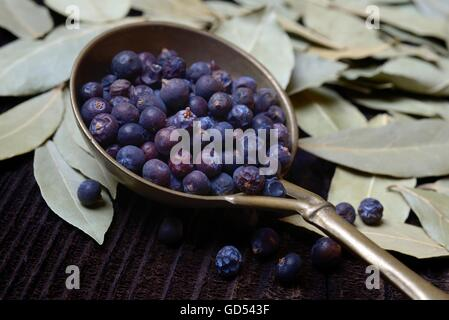 getrocknete Wacholderbeeren in Messingkelle, getrocknete Lorbeerblaetter / (Juniperus communis), (Laurus nobilis), - Stock Photo