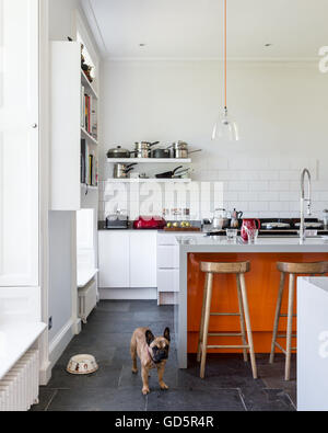 French bulldog in high ceilinged kitchen with white metro tiles and grey riven slate floor. - Stock Photo
