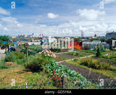 Allotments on Prince of Wales Road with Salt Island and Holyhead harbour beyond. Holyhead, Isle of Anglesey, North - Stock Photo