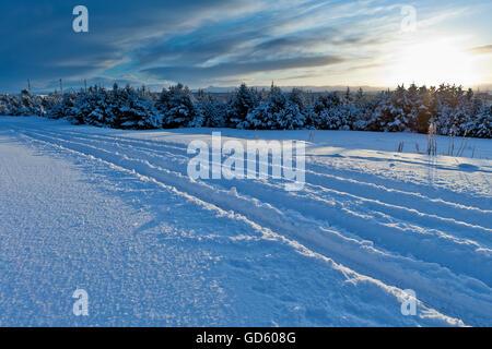 Tracks, Winter, Reykjavik, Iceland - Stock Photo