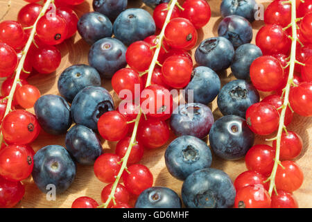 Group of bilberries and red currant placed on a golden dish with white isolated background. - Stock Photo