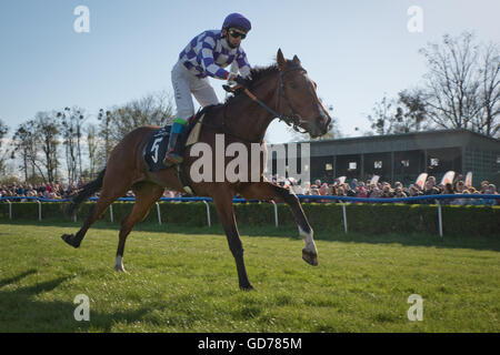 WROCLAW, POLAND - APRIL 24; 2016: International race for 3-year-old horses In action J. Kolakowski on a horse Lope. - Stock Photo