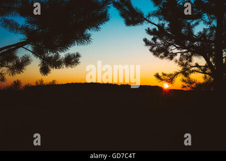 Silhouettes Of Fir Branches On Background Of Colorful Sunset Sky. Dark Land Ground And Forest On Horizon. - Stock Photo