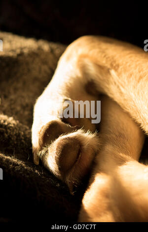 close-up of dog's paws and legs - Stock Photo