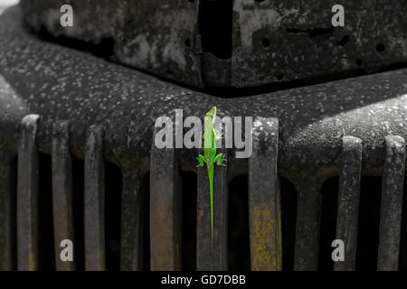 A Gecko resting on the front end of an antique rusted car - Stock Photo