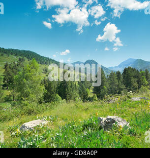 Beautiful pine trees on background high mountains. Andorra, Pyrenees - Stock Photo