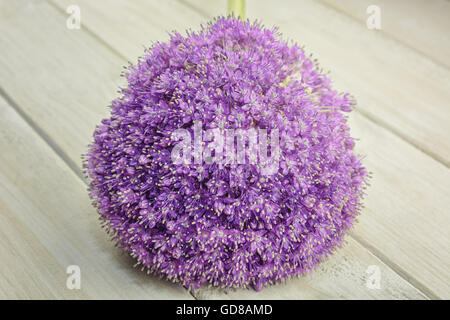General view of the ornamental onion blossoms on a light wooden background - Stock Photo