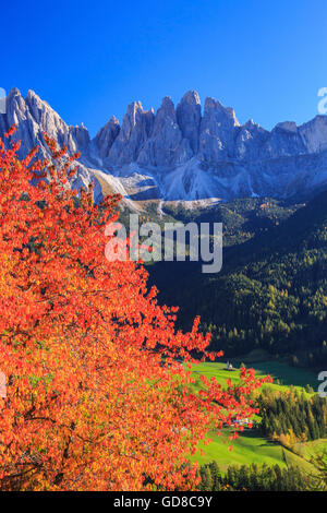 Colorful autumn trees frame the group of Odle St. Magdalena Funes Valley South Tyrol Dolomites Italy Europe - Stock Photo